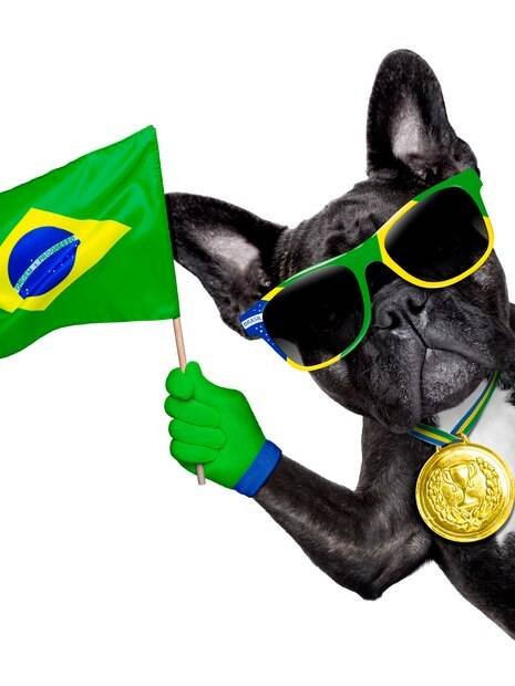 Tome todas precauções para que o seu cachorro possa curtir a  Copa do Mundo junto com você!