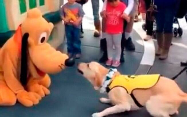 Cão-guia conhece Pluto na Disney e vídeo vira hit