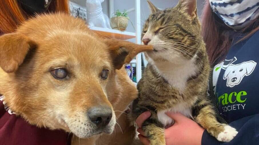Spike estava com catarata e precisou ter os dois olhos removidos, Max se tornou seu gato guia