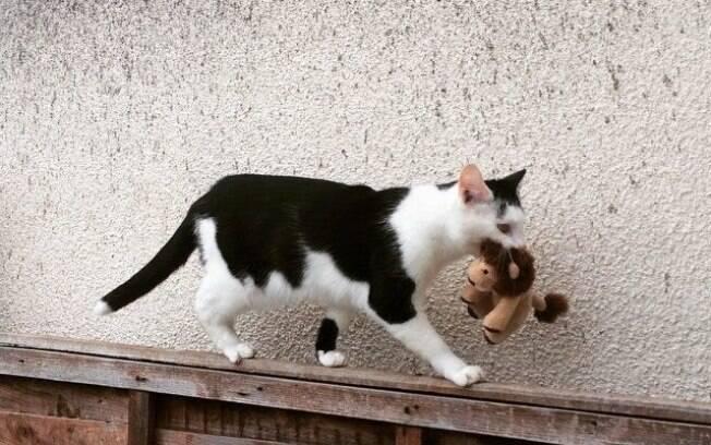 O gato fofo sai com seu brinquedo para passear