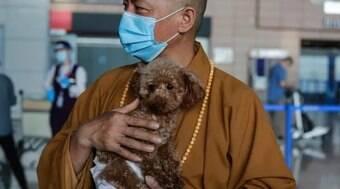 Conheça o monge chinês que já salvou mais de 8.000 cães de rua