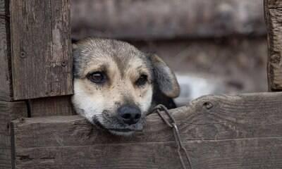 Os pets são vistos como bens do dono, explica advogado