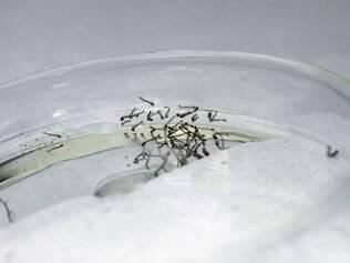 Teste promete detectar dengue em 20 minutos