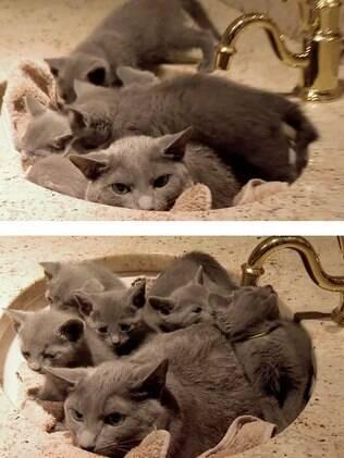 Essa gata tinha a pia como o seu lugar favorito. Agora não é apenas dela.
