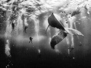 Foto de baleia e filhote cercados vence