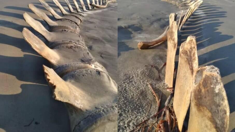 Especialistas afirmam que há semelhanças com uma baleia enterrada no local há 12 anos