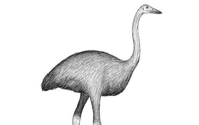 Ave pertencem à espécie Aepyornis e Mullerornis, que provavelmente foram capturadas por humanos da Pré-História