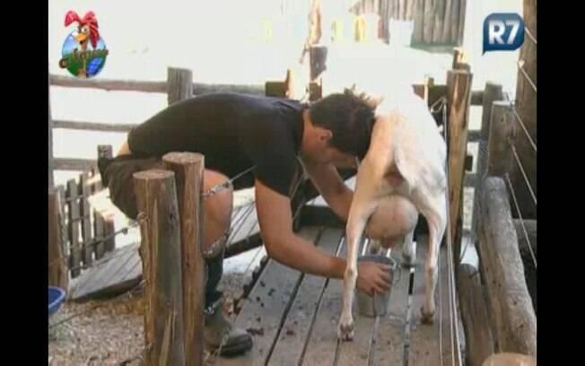 Thiago ordenha a vaca no lugar de Raquel