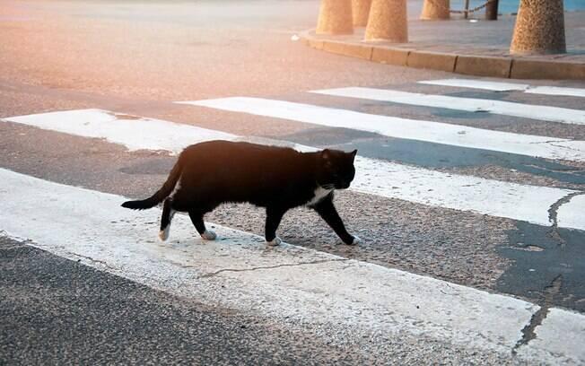 Um gato, quando foge, não tem a noção de como atravessar a rua e pode sofrer atropelamentos.