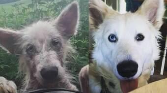 Cachorro de rua passa por transformação após ser resgatado
