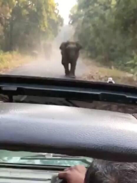 elefante andando em direção ao carro