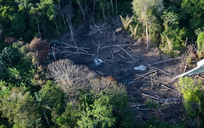 Gisele Bundchen 'pede' e Temer 'veta' medidas pró-desmatamento na Amazônia