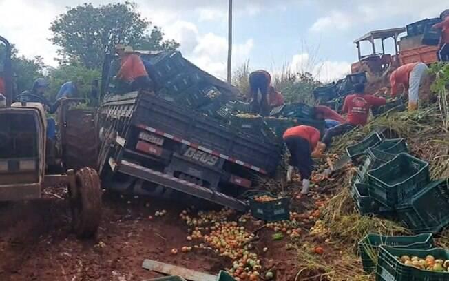Caminhão carregado com tomate tomba em área rural de Sumaré