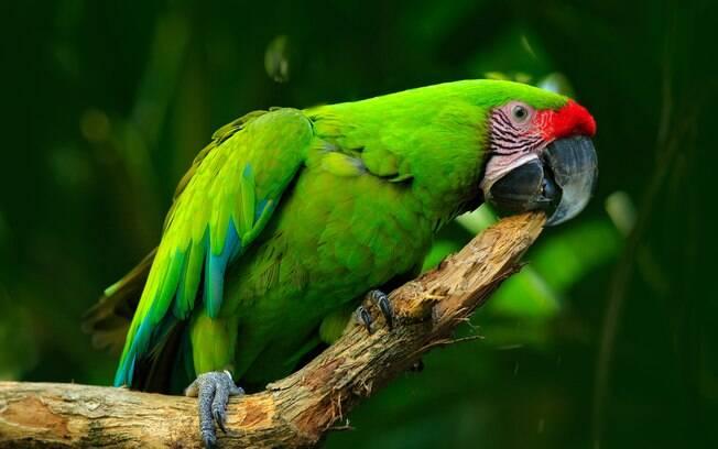 Batizado de Leozinho, papagaio convive há 17 anos com uma idosa no interior da Paraíba