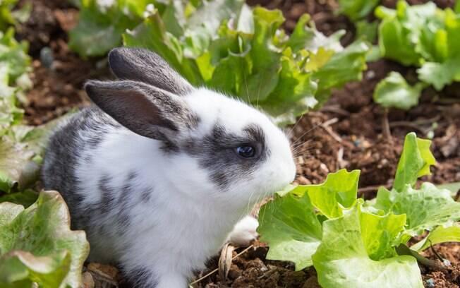 Para preservar a saúde do coelho, é importante conhecer os alimentos proibidos e não se esquecer de não oferecê-los