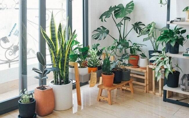 Descubra qual planta combina com seu signo
