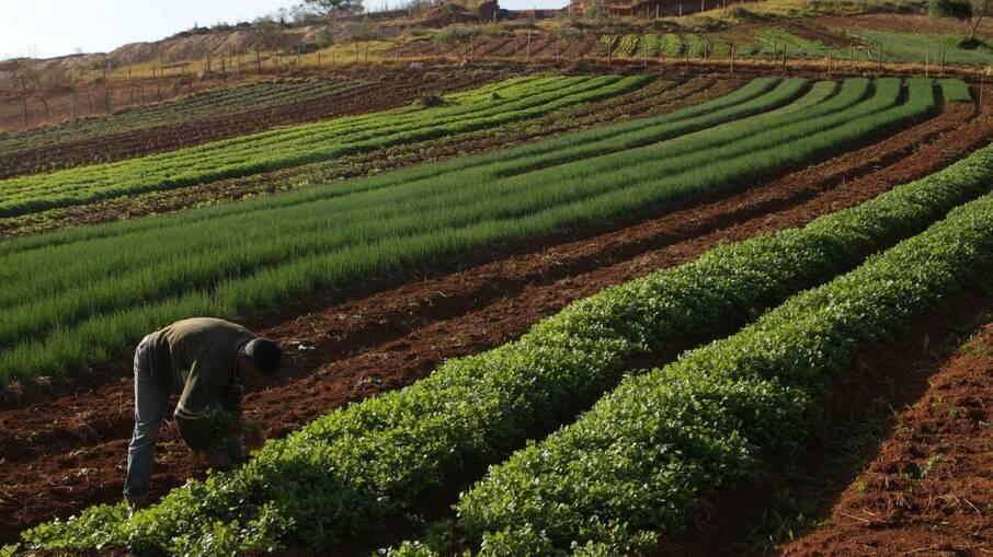 Aumento dos preços das commodities encarece produção de alimentos