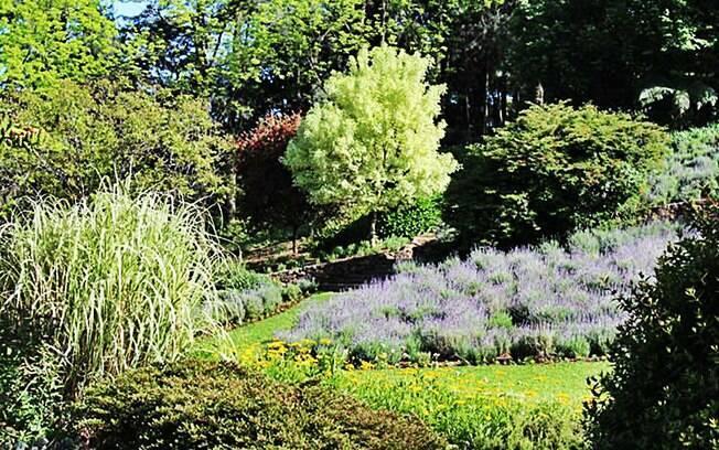 No Le Jardin, em Gramado, 10 mil pés de lavanda perfumam e embelezam. Foto: Divulgação