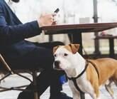 """A cultura """"pet friendly"""" está chegando com tudo no Brasil"""