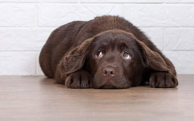 Como acalmar cachorro: dicas para proteger seu pet dos fogos de artifcio