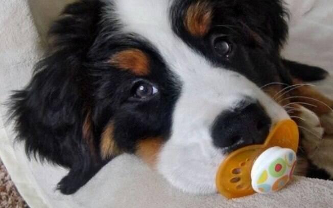 Hoje em dia os cachorros são tratados como filhos