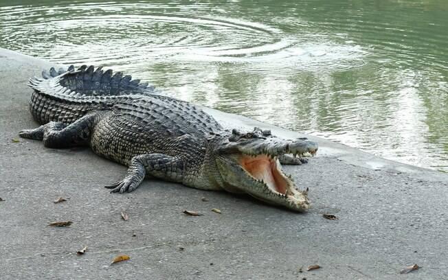 O crocodilo que pertenceu ao líder cubano atacou homem que estava discursando durante evento na Suécia.