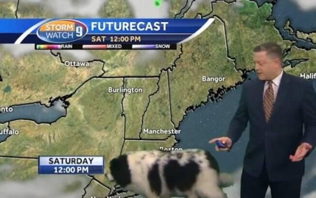 Cão invade programa ao vivo e atrapalha a meteorologia
