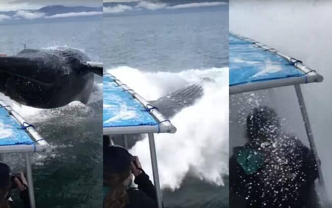 Felizmente, nem turistas e nem o animal ficaram feridos, já que a baleia-jubarte não chegou a atingir barco de expedição