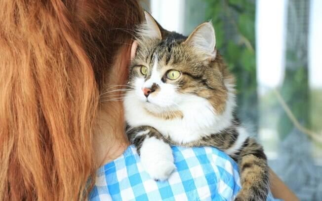 Gato perdido: dicas para evitar a fuga do pet e como encontrá-lo