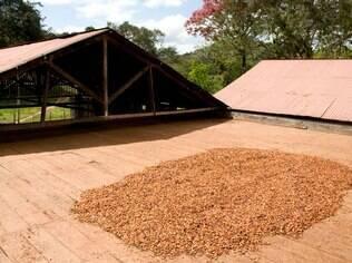 Na Fazenda Provisão, é possível tomar café da manhã com vista para a secagem do cacau