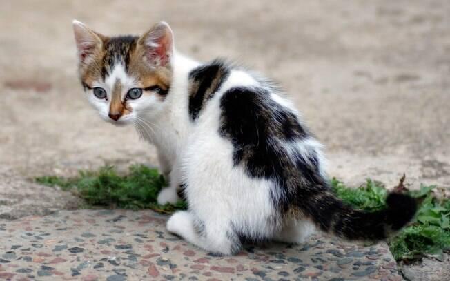 Quanto mais novo o gato é atingido pela gripe, uma das doenças de gato, mais fortes serão os sintomas