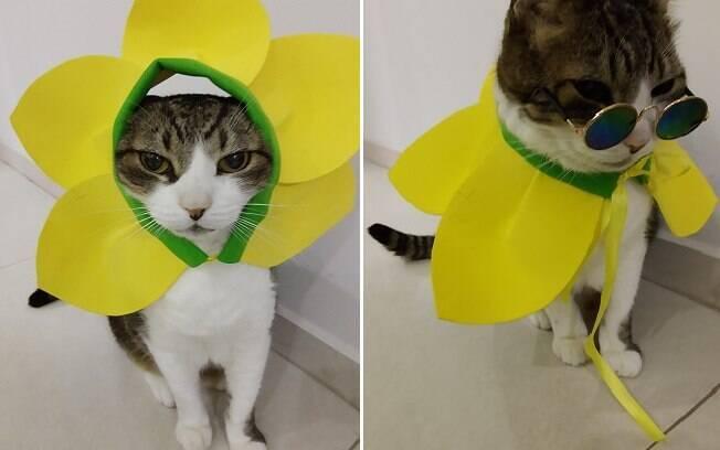 gato fantasiado