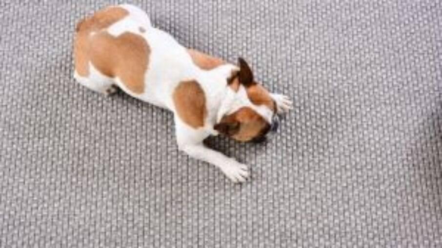 Como escolher um tapete pet friendly para sua casa