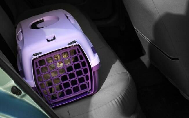 Vá tranquilizando o gato durante o trajeto para que ele não fique nervoso