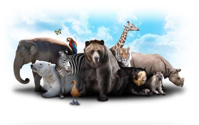 O Dia Mundial dos Animais é comemorado no dia 4 de outubro