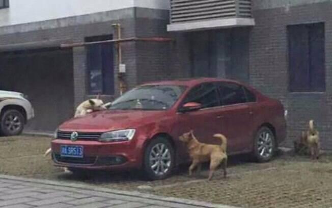 Cachorros vingativos destruíram carro de homem que agrediu um deles.