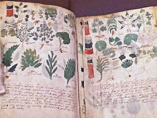 Desenhos já foram relacionados a vegetação da América Central