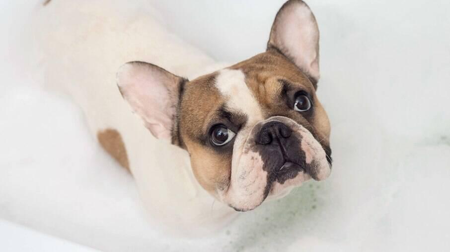 A aromaterapia traz diversos benefícios para a saúde dos animais