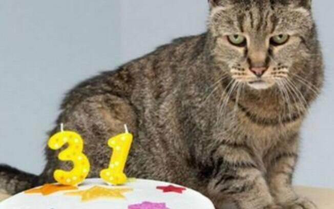 Nutmeg, o gato mais velho do mundo.