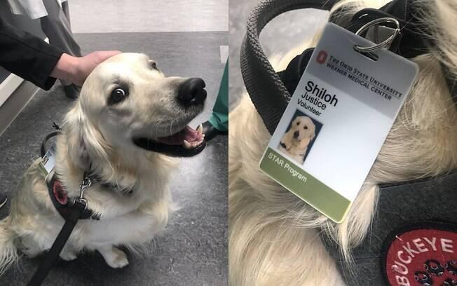 Hospital contrata cachorro para ajudar os funcionários a desestressar