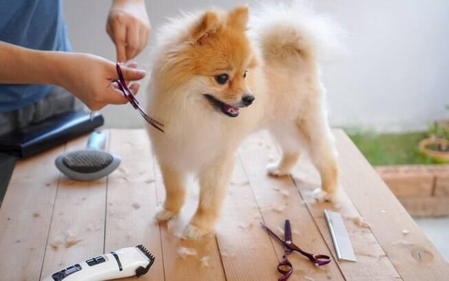 A tosa do cachorro nos períodos mais quentes do ano deve ser curta