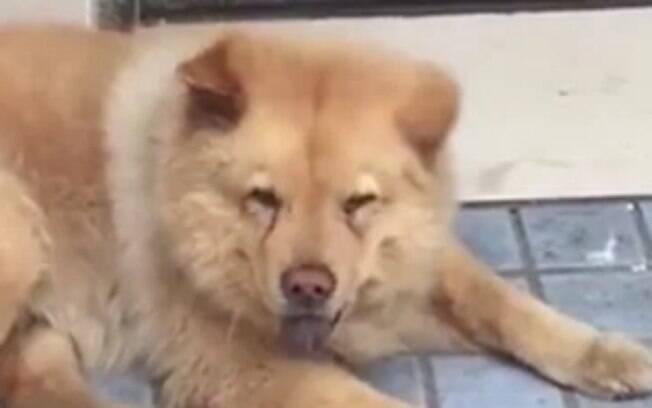 Xionxiong é um cachorro leal que espera o dono todos os dias na frente da estação de metrô