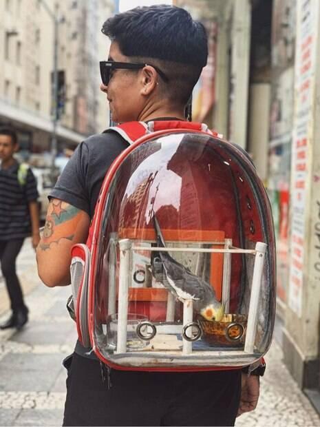 paulinha portes leva passarinho tom zé em mochila
