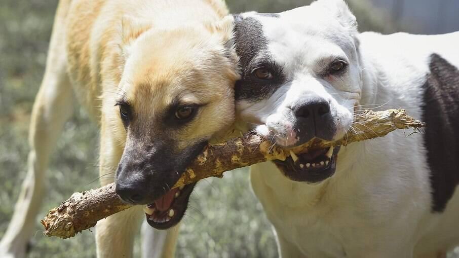Para os animais, qualquer objeto que nos parece irrelevante, pode se tornar diversão