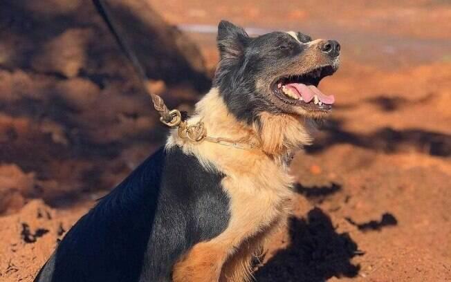 O cão era chamado de Thor.