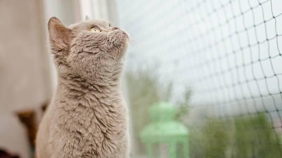 Para tutores, principalmente de gatos, é indispensável o uso de telas de proteção em todas as janelas