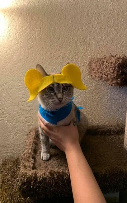 Gato vestido de Lindinha
