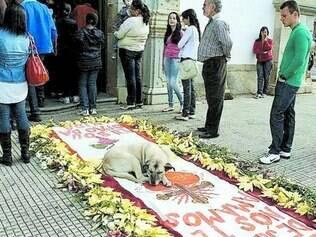 Despedida. Xodó dos moradores, cadela Lassie esteve na missa pouco antes de ser envenenada