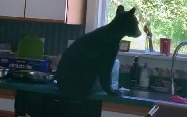 Três filhotes de urso invadiram uma casa no Alasca.