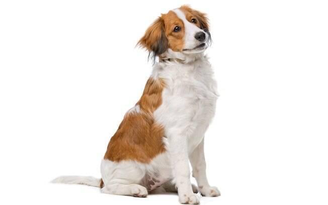 Há inúmeros tipos de fisioterapia que ajudam a melhorar a qualidade de vida dos cães